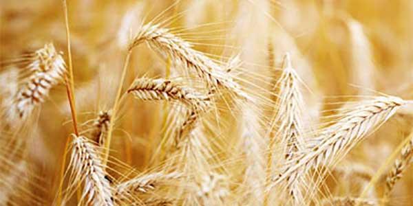 Testimonials Scottish Agronomy